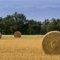 Ein gemähtetes Feld, auf ihm stehen drei Rundballen