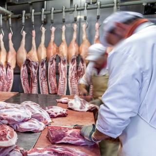 Fleischer arbeiten an einem großen Tisch und zerteilen Schweinerücken.