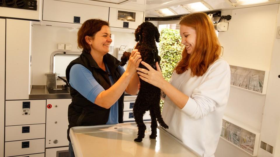 Tierärztin und Auszubildende untersuchen einen Hund und lächeln dabei