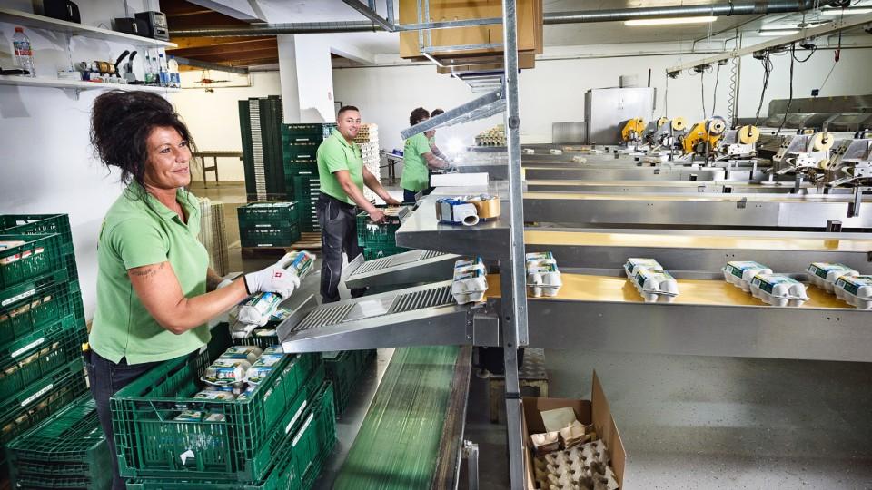 """Mitarbeiter der Owi-Ei machen eine """"Abnahme"""" der Eier-Verpackungen an den Produktionsbändern"""