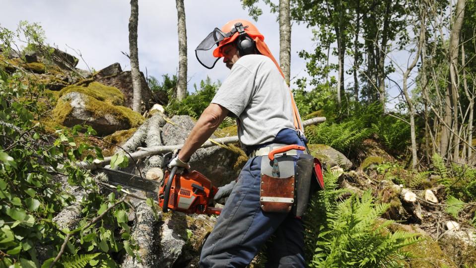 Mann mit Schutzkleidung und Kettensäge zersägt in einem Wald einen Baum