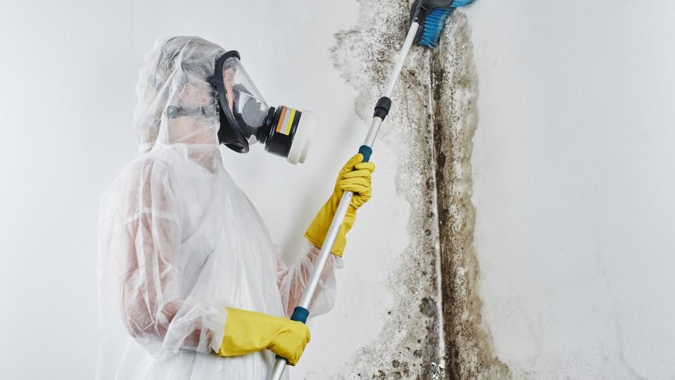 Person in Schutzbekleidung entfernt Schimmelpilz von einer Wand